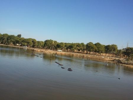 האגם בספארי