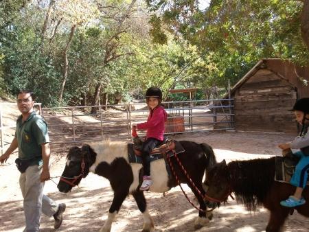 רכיבה על סוסי פוני בספארי