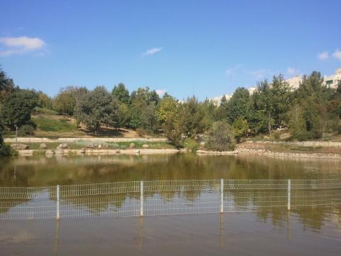 האגם בגן הבוטני