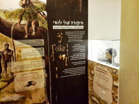 סיפורה של לוסי במוזיאון רמת גן