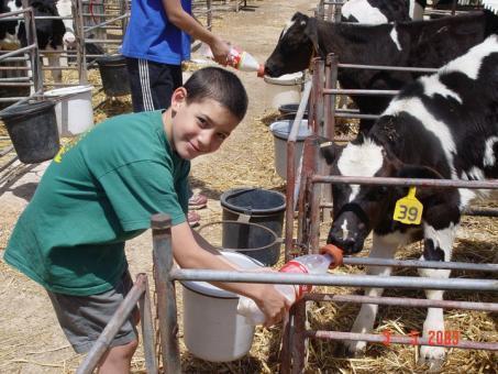 שביל פרות החלב בבית לחם הגלילית