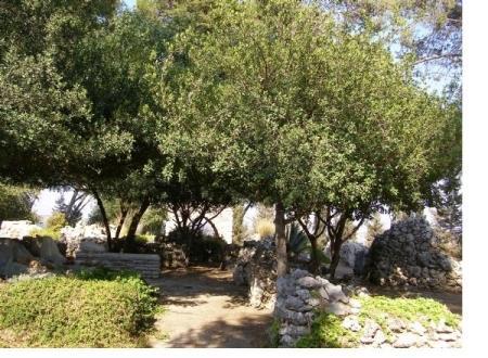 בית הקברות של אגודת השומרים בטבעון