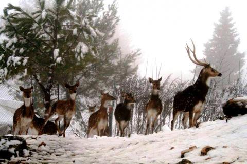 חוות ארץ האיילים בגוש עציון