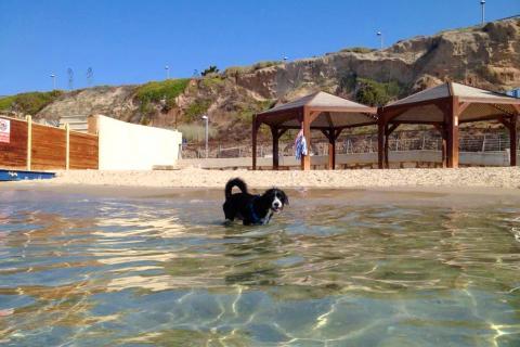 חוף הכלבים בתל אביב