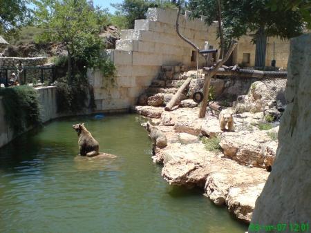 דוב סורי בגן החיות במלחה