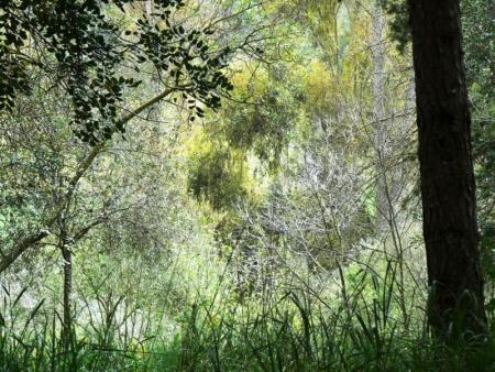 יער חולדה ובית הרצל
