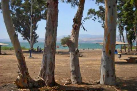 חוף צאלון -כנרת