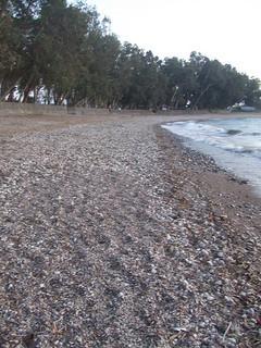 חוף סוסיתא
