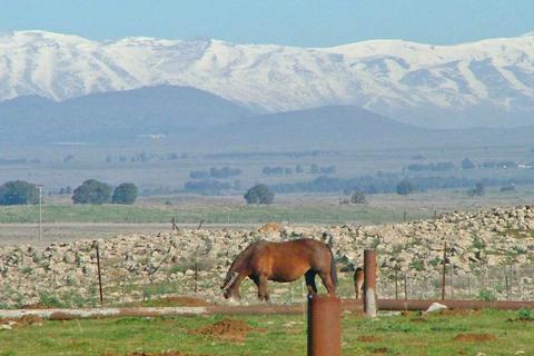 רכיבה על סוסים בנוב רמת הגולן