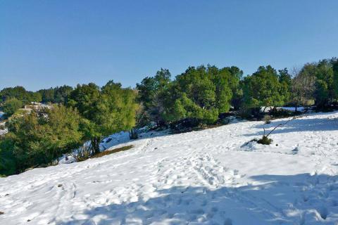 הג'ובה הגדולה ביער אודם בשלג