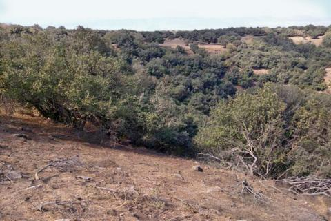 הג'ובה הגדולה ביער אודם