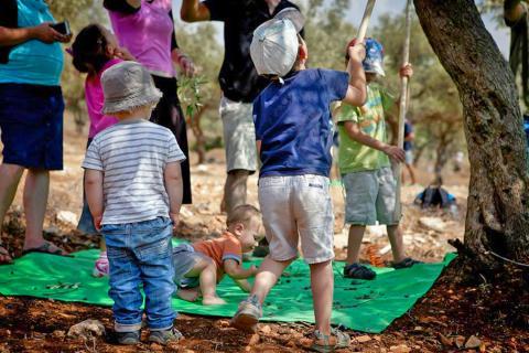 פסטיבל מסיק זיתים בגליל התחתון