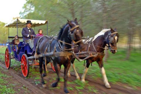 הכרכרה של רוז'ה טיול סוסים ביער ובשדות, נגיש לנכים בקצרין, רמת הגולן