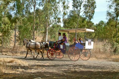 הכרכרה של רוז'ה טיולי סוסים בקצרין