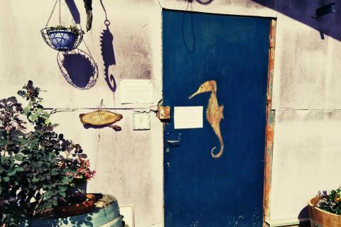 יקב סוסון ים בבר גיורא