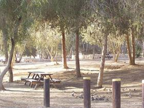 חניון לילה הרועה בשדה בוקר