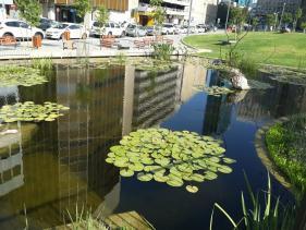 הבריכה ומרבדי הדשא בגן קרית ספר