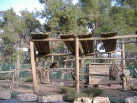פארק הקופים כפר דניאל
