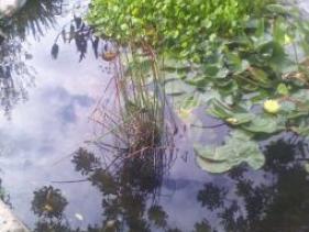 גן לאומי חמת טבריה מקור המעיינות החמים