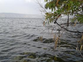 חוף עקב - כנרת