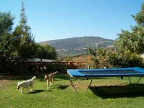 ענבר אירוח כפרי - החצר