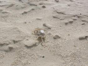 יש חיים בחוף