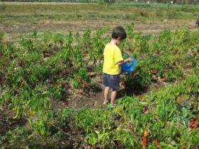 חוות דרך התבלינים