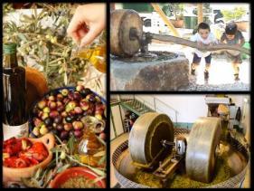 מרכז המבקרים כד בני דרום, ייצור שמן זית גורמה- עבר והווה