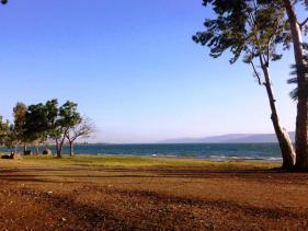 חוף דוגה בכנרת