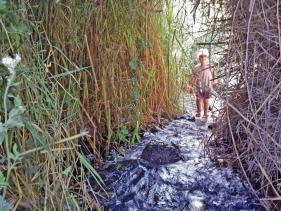 דרבשיה – עין דיבשה במורדות רמת הגולן