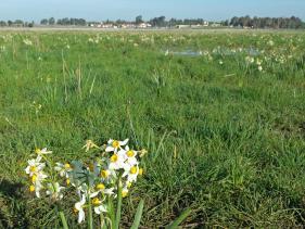 שמורת אירוס הביצות אחו נוב בגולן