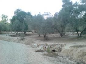 חניון הזיתים ביער אשתאול
